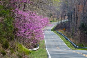 Redbuds on Rt 249 by Terri Aigner