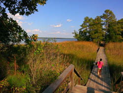 York River State Park - Terri Aigner Photo